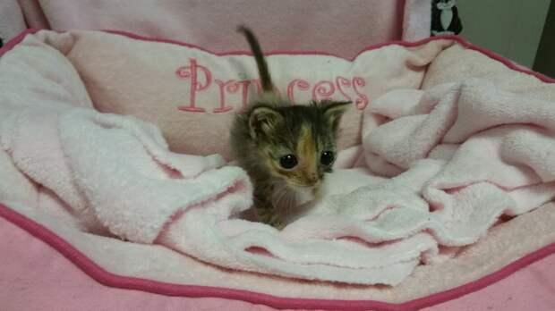 Размеры этого спасенного котенка поражают своей миниатюрностью