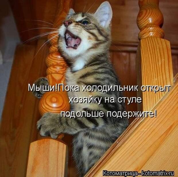 Прикольная котоматрица  (20 фото)