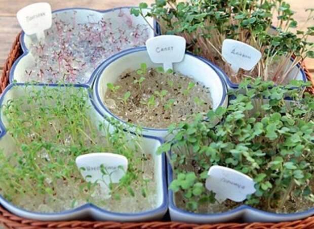 Огород: сезонные работы в декабре