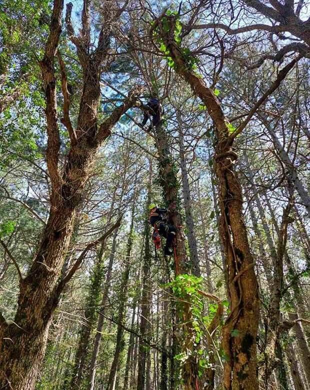 В Крыму парапланерист завис на дереве