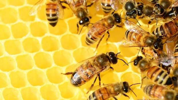 Зарубежные ученые нашли доказательства добычи меда 3500 лет назад