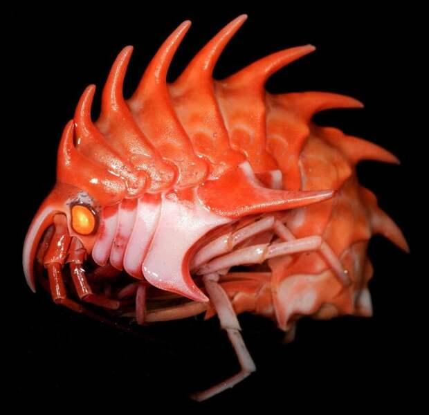 Невероятные живые существа, которые пугают и завораживают своей красотой