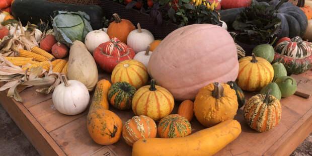 Урожай без лишних усилий: какие овощи вырастут на огороде сами