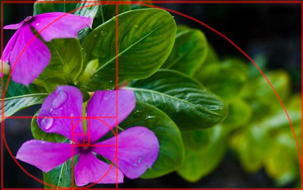 8 Эффектов, о которых должен знать каждый фотограф