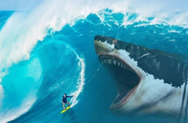 В Австралии серфер погиб после нападения акулы
