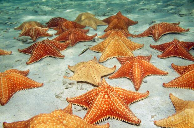 Звезды на дне морском