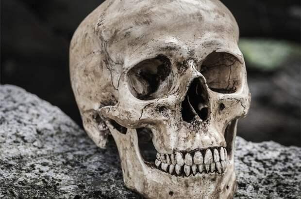 10 секретов живой природы, которые ученым пока так и не удалось раскрыть