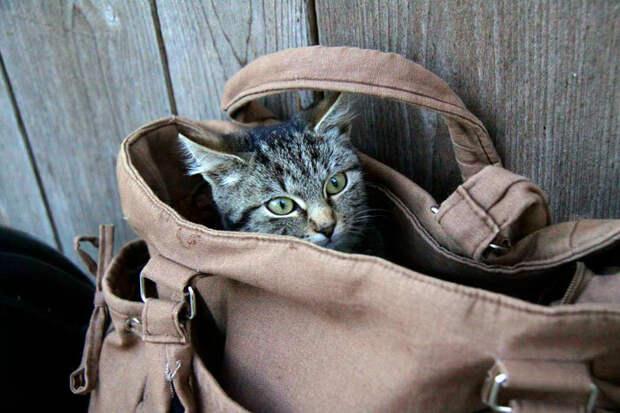 Два друга не дали утопить котят и украсть соседкину пенсию
