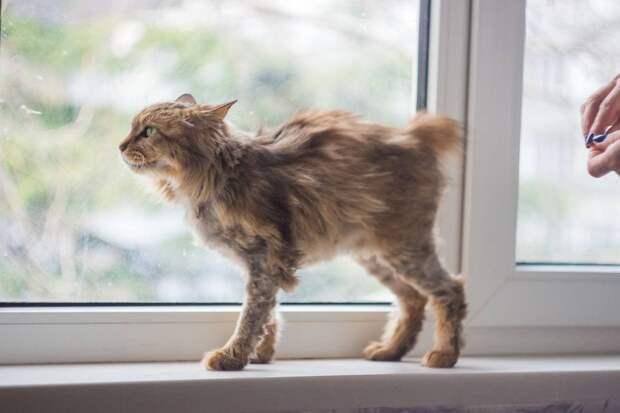 «Она не могла есть, была очень тощая»: На Южном берегу Крыма спасли умирающую кошку, оставшуюся без зубов
