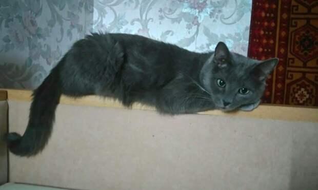 Раненный котик сидел под дверью, а люди все проходили мимо