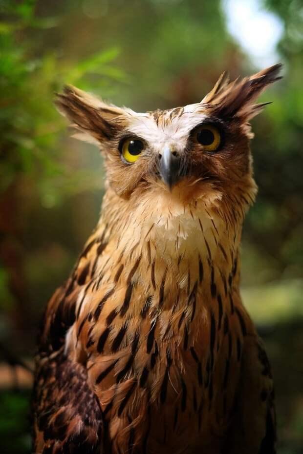 Сама величественность дикая природа, красиво, мир, планета, природа, птицы, совы, фото