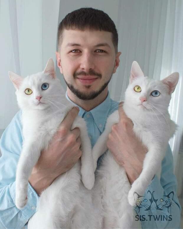 Хозяин сам частенько делает снимки с близняшками (ну а как можно пройти мимо такой красоты?) Абисс, Айрис, глаза, кошка, красота, окрас