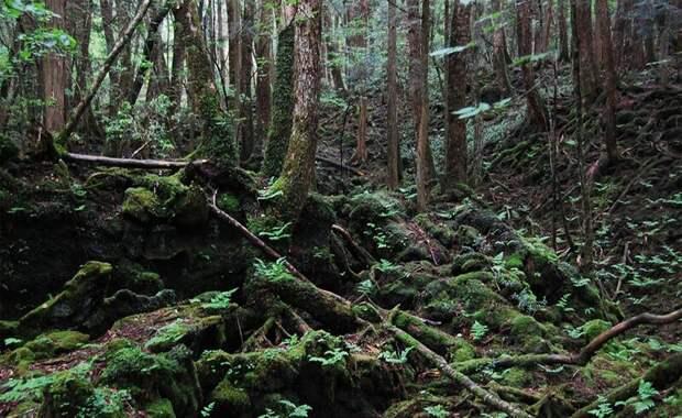 Лес Аокигахара Япония