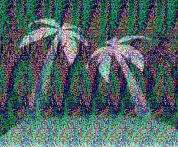 Тест на четкость зрения и воображение. Что вы видите на картинке?