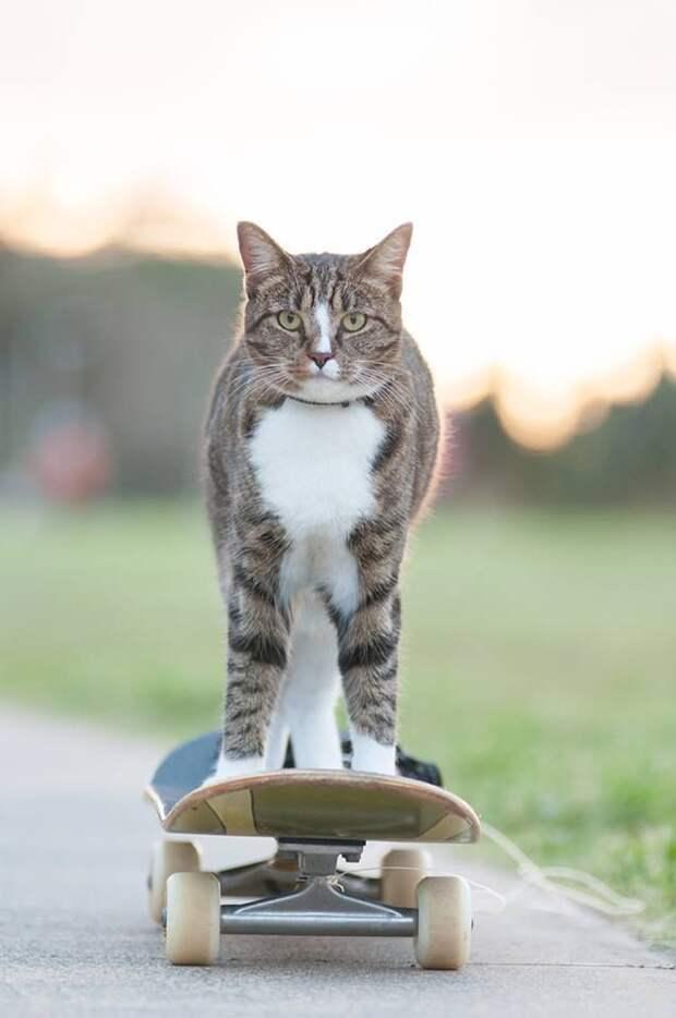 Диджа, которою забрали из приюта, попала в книгу рекордов Гиннесса как самая умная кошка в мире!