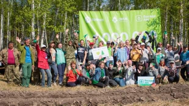 10 тысяч сосен высадили неподалеку от села Полковников в Алтайском крае