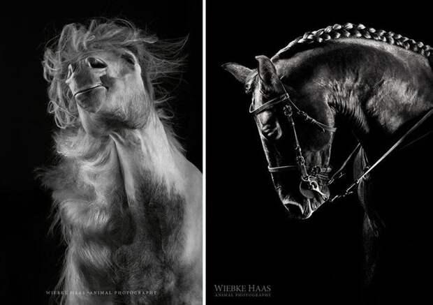 Сэмми и Атила животные, искусство, лошади, фотография