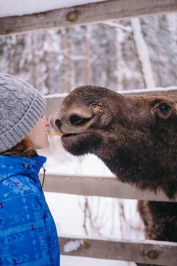 2. Ленивец или всё-таки лось? в мире, животные, забавно, кадр, подборка, показалось, прикол, юмор