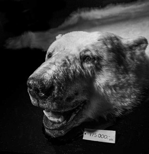 фото: Том Свенссон/PA2F ENVIRONMENTAL PHOTOGRAPHY AWARD 2021