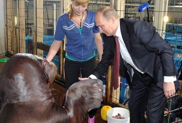 Путин жмет ласту моржу