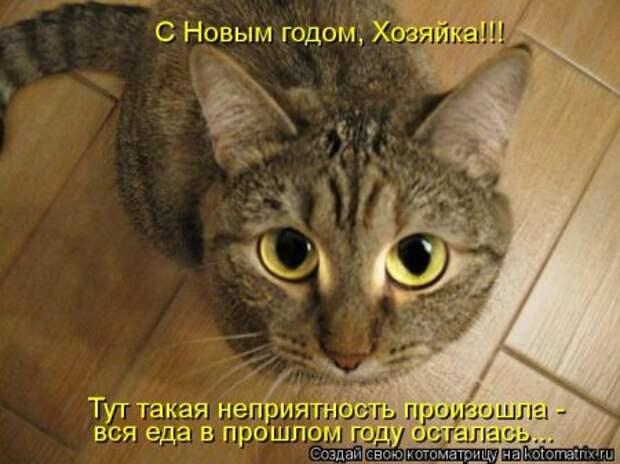 1451492487_kotomatritsa_wv