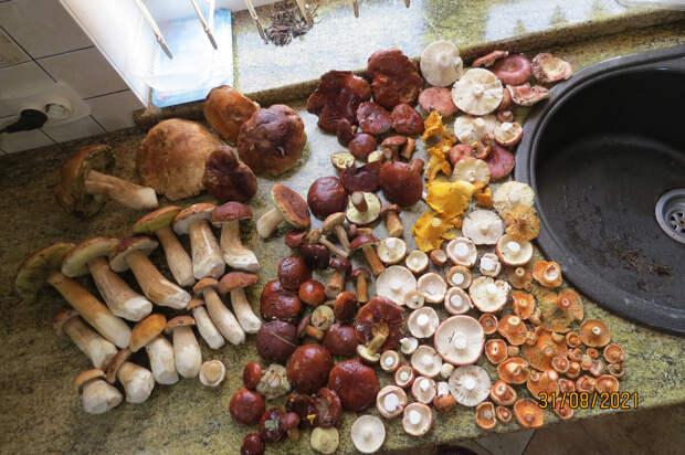 Малосольные сыроежки - хит грибного сезона 2021