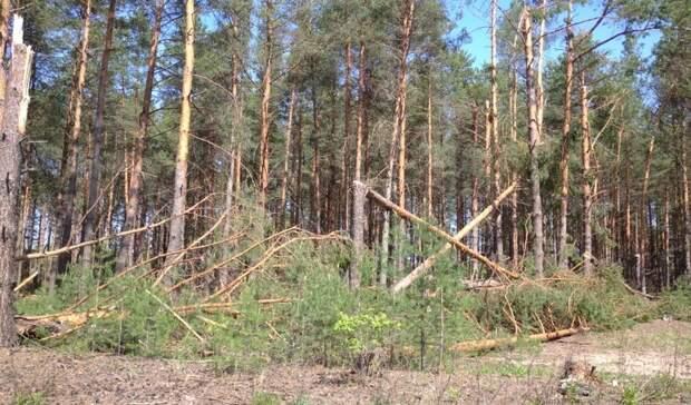 Как пострадали нижегородские леса отурагана вминувшие выходные? Взгляд свысоты