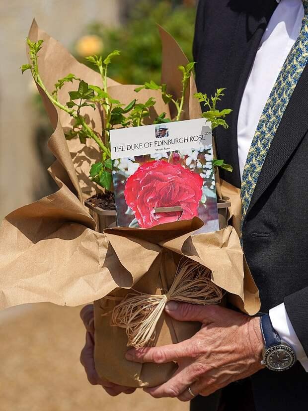 Елизавета II роза в честь принца Филиппа
