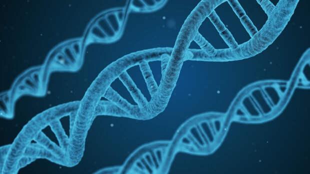 Биологи из США: Мужчины из-за Y-хромосом стареют быстрее женщин