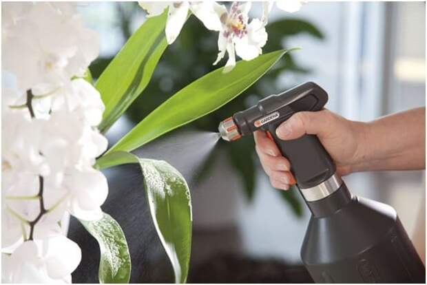 Посадка орхидеи и уход в домашних условиях