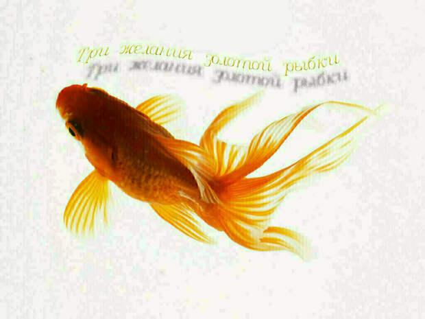Три желания золотой рыбки. Часть 19