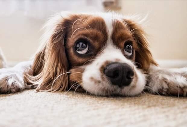 В Рязани неизвестные выпустили собак из питомника для бездомных животных