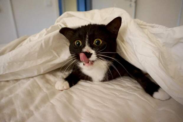 Сегодня нам поднимут настроение забавные и симпатичные котики!