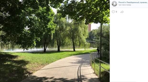 Фото дня: плакучие ивы в парке Дружбы