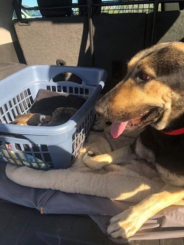 Беременная собака оказалась в ящике, куда ее бросил жестокий хозяин…