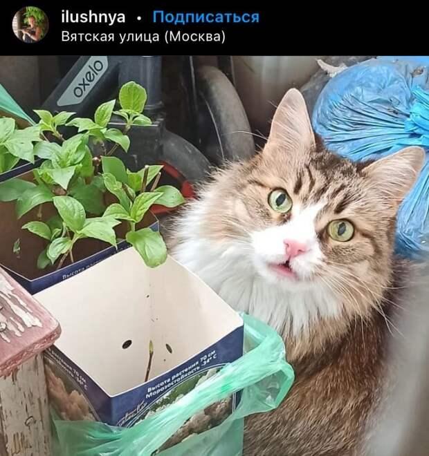 Фото дня: о рассаде и кошке на Вятской