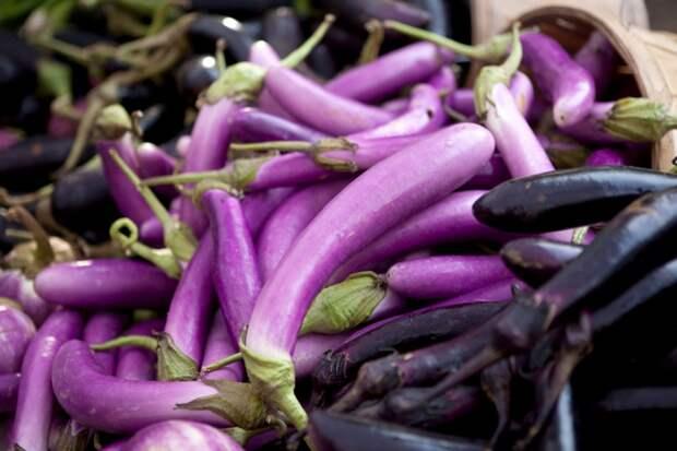 Баклажаны: китайский метод выращивания рассады