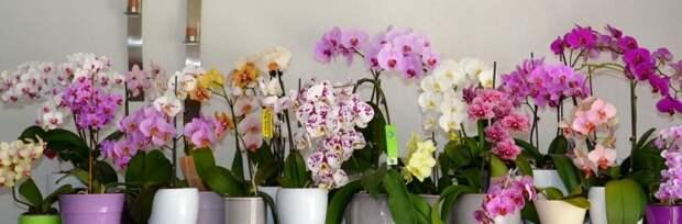 Здоровые и цветущие орхидеи: простая хитрость при поливе