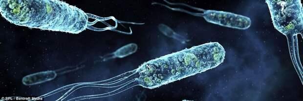 Невероятные изображения бактерий в организме человека