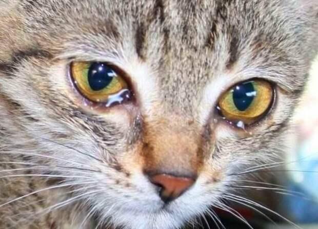 Основные причины почему кошка плачет.