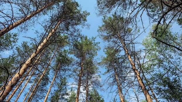 На части территорий Удмуртии ввели запрет на посещение лесов