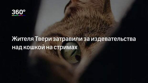 Жителя Твери затравили за издевательства над кошкой на стримах
