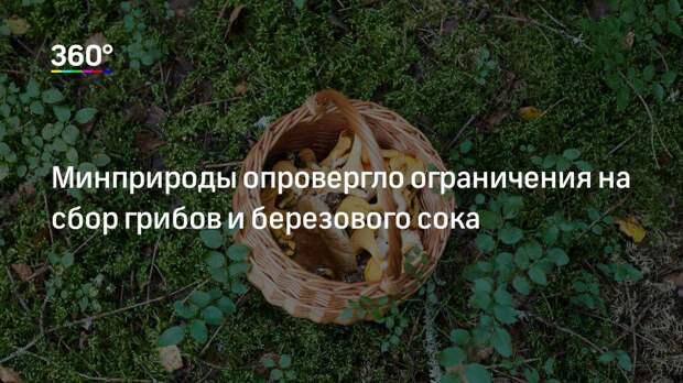 Минприроды опровергло ограничения на сбор грибов и березового сока