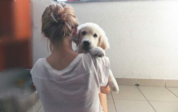 5. Собаки знают, кто вам нравится больше, а кто — меньше собаки, факты