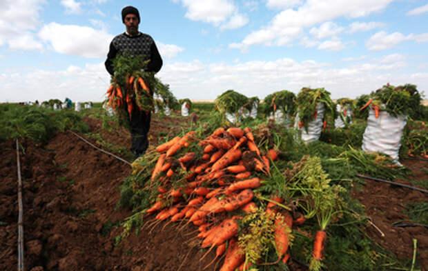"""Развитие сельских территорий обсудили на стратегической сессии """"Единой России"""""""