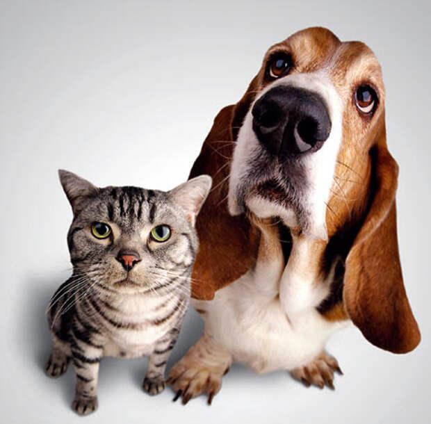 Домашние животные: врачеватели душ и тел...