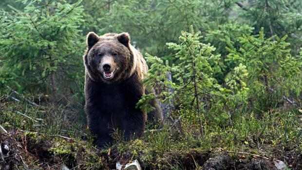 Медведь убил охотившегося жителя Хабаровского края