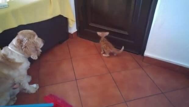 Этот котенок мог умереть из-за жары, но его вовремя спасли