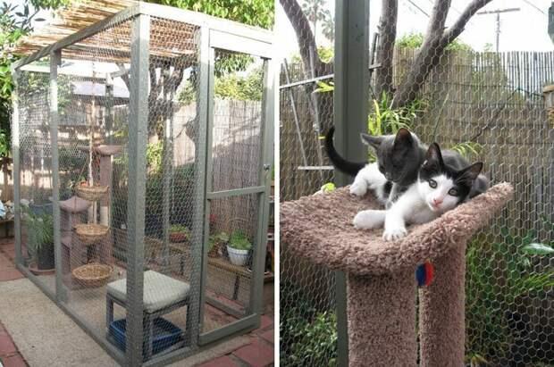 Вот так выглядит кошачья дача! братья меньшие, домашние животные, заота о питомцах, кошачье патио, кошачья дача, кошки, необычно, прогулки