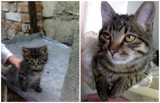 Как кот спас котёнка и оставил его вместо себя…